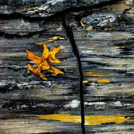 Rock and Fallen Leaf by Kurt Brennan - Nature Up Close Rock & Stone ( fall, cracked, rock, leaf, rocks )