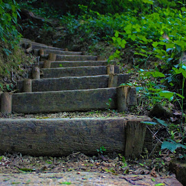 Stairs in the woods by Majda Rogic didic - City,  Street & Park  City Parks ( stairs, wood, green, trees, rocks )