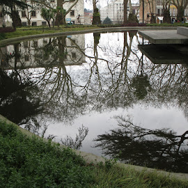 Lago  by Lurdes Matos - City,  Street & Park  Vistas ( water, houses, green, reflections, puddle )