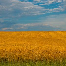 green gold blue by Bob Applegate - Landscapes Prairies, Meadows & Fields ( wheat, field, sky, summer, cloud )