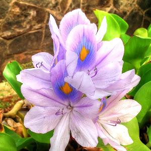 bunga mata_Snapseed.jpg