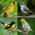 Birds Memory Game APK for Bluestacks