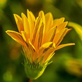 YellowWildflowerMacro2 by Joanne Burke - Nature Up Close Flowers - 2011-2013