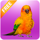 Funny Talking Parrot APK for Blackberry