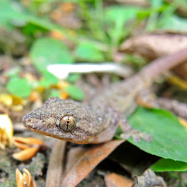 One Eyed by Subhashis Pattadar - Animals Reptiles