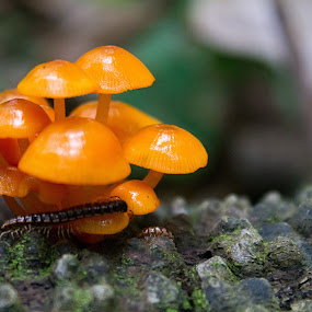 by Susan England - Nature Up Close Mushrooms & Fungi