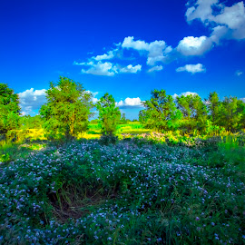 by Keith Lowrie - Landscapes Prairies, Meadows & Fields