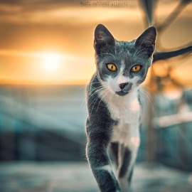 Walk of fame by Wasfi Matoussi - Animals - Cats Portraits ( cats, walking, cute, photography, animal,  )