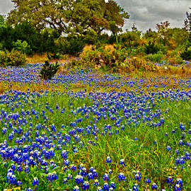 Texas field in spring by David Winchester - Landscapes Prairies, Meadows & Fields