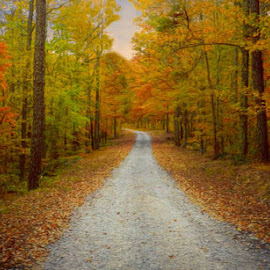 Autumn Trail by Karen Carter - Landscapes Forests ( autumn, trail, fall, trees, road )