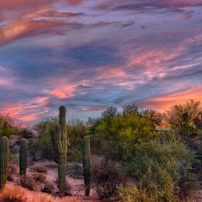 Multi Colored Sunset by Charlie Alolkoy - Landscapes Deserts ( desert, sunset, arizona, tucson, sunrise, cactus )