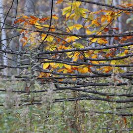 Nature Patterns  by Liana Lputyan - Abstract Patterns ( nature fall pattern )