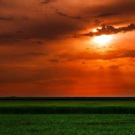 red light by Alix Niculae - Landscapes Prairies, Meadows & Fields ( field, sunset, sunrise, sun, fields )