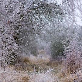 by Helena Jirasová - Landscapes Weather ( winter journey )