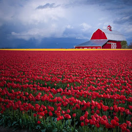 Red  by Clement Stevens - Landscapes Prairies, Meadows & Fields