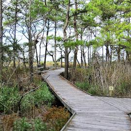 Boardwalk through the Assateague trail by Mary Gallo - City,  Street & Park  City Parks ( trail, nature, boardwalk, park, landscape,  )