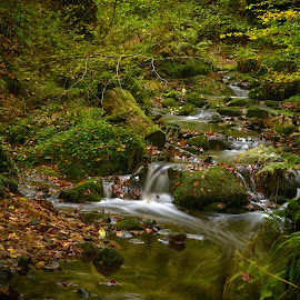 The Silence Of Autumn by Marco Bertamé - Nature Up Close Water ( water, nature, flowing, autumn, green, fall, silence, long shutter speed, long exposure, forest, leaves )
