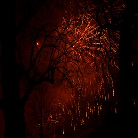Fireworks by Nasr Qureshi - City,  Street & Park  Night ( red, nasrqureshi, reigate, dark, trees, fireworks, night )