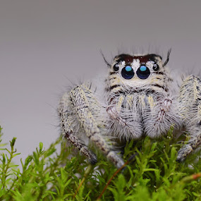 i am cute by Tele Nicotin - Animals Insects & Spiders