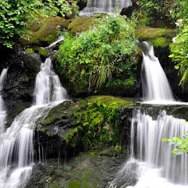 Rouken Glen Waterfall Close-Up by Wendy Milne - Nature Up Close Water ( water, park, waterfall, stone, rouken glen )