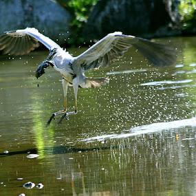 Mud catch by Alit  Apriyana - Animals Birds
