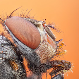 by Arslan Uçar - Animals Insects & Spiders