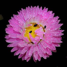 Symphonie en rose by Gérard CHATENET - Flowers Single Flower