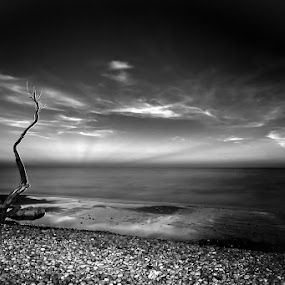 Arbre de plage by Olivier Tabary - Landscapes Beaches ( mono-tone, plage, b&w, arbre, black and white, galet, b and w, pwc81: paysages noir & blanc, paysage marin, arbre mort, landscape, monotone )