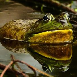 Frog by Amol Polke - Animals Amphibians (  )