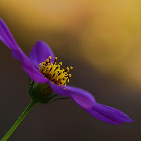 by Angela Codrina Andries Bocse - Flowers Flower Gardens