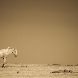 Horse Land by Manoj Kumar Vittapu - Animals Horses ( animals, sky, horse, wildlife, india, landscape, evening, photography )