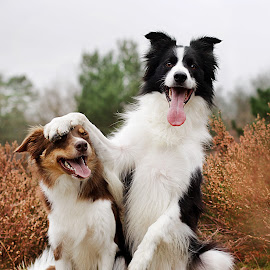 Gizmo & Swirl by Judith Vrugt - Animals - Dogs Portraits ( canon, photograph, summer, fun, portraits, cute, dog )