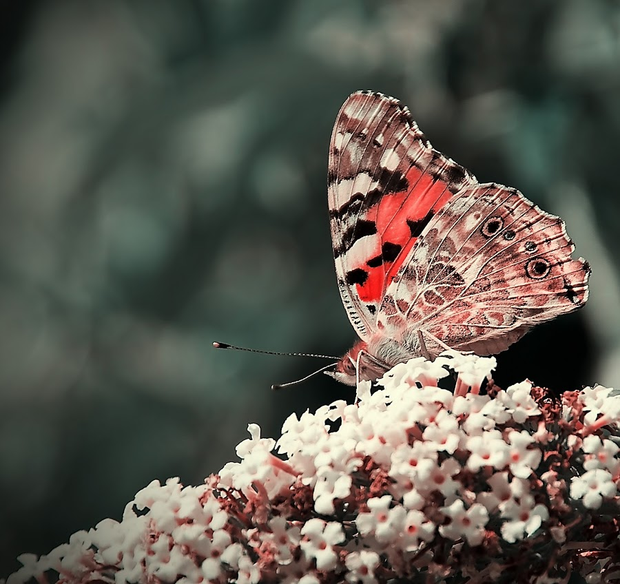 A butterfly by Delia Galhotra - Animals Insects & Spiders ( butterfly, delia, digiphotography, nature, wings, summer, insect, flowers, galhotra )