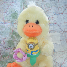 traveling toys by Elizabeth O - Artistic Objects Toys ( toy, map, duck, travel, yellow )