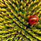 ladybug3 1024pxl.jpg
