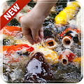 Download Koi Free 3D Live Wallpaper APK for Android Kitkat