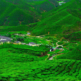Tea Plantation by Nasaruddin Naseh - Landscapes Mountains & Hills