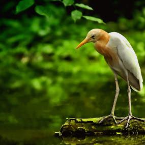 Alone by Jovi Photograph - Animals Birds