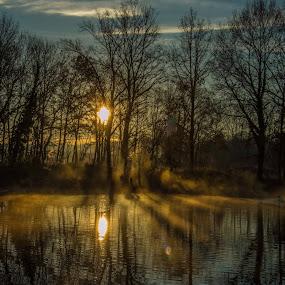 by Francky Audouard - Landscapes Forests (  )