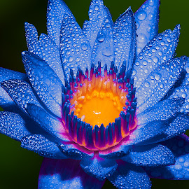 by Ryan Dominguez - Flowers Single Flower