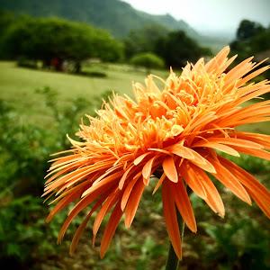 granden n flower.jpg