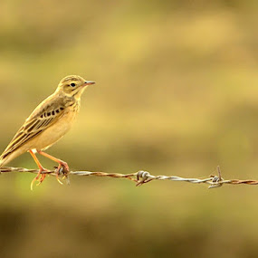 Sunbath by Priyank Jha - Animals Birds ( nikon d5100, nature, wildlife, india, birds )