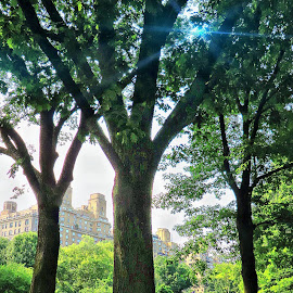 Central Park in New York City by Tricia Scott - City,  Street & Park  City Parks ( tree, park, trees, manhattan, new york, nyc, central park, city )