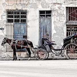 Horse Cart by Richard Michael Lingo - Transportation Other ( horse, cart, transportation, havana, cuba,  )