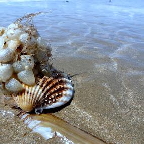 Parasite by Claudia Romeo - Animals Sea Creatures ( shell, uk, sea, parasite, beach )