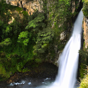 waterfall, and trees by Cristobal Garciaferro Rubio - Nature Up Close Trees & Bushes ( water, cascada, xico, waterfall, trees, canion, cañon )