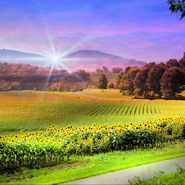 Sunflower Field by Darlene Lankford Honeycutt - Digital Art Places ( sunflowers, dl honeycutt, landscapes, flowers, digital, fields )