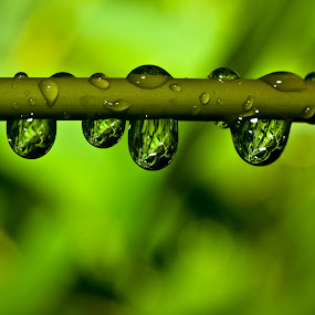 Rainmirror by Ralf  Harimau - Nature Up Close Leaves & Grasses ( bambus, bamboo, tropfen, drops, raindrops, regen, rain )