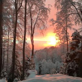 Backlight by Mak Vejzović - Landscapes Forests (  )
