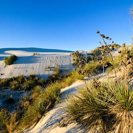 Selenite Salutations & Solar Returns by Ally Skiba - Landscapes Deserts ( crystals, sand, birthday, desert, national monument, sand dunes, gypsum, white sands, selenite, sunrise, landscape, new mexico )